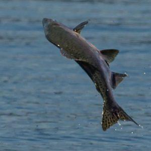 Just Add Water Alaska :: Kayak Fishing Tours
